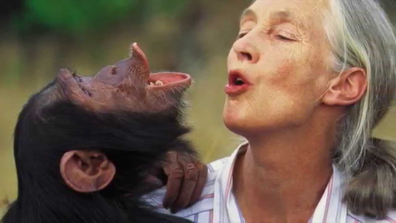 Gmo food and fraudulent industry science condemned by world famous scientist jane goodall
